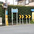Photos: モリアオガエルの道