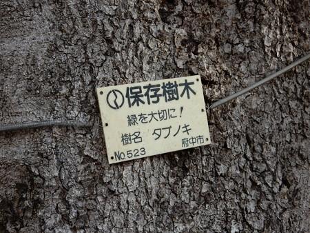 府中の名木百選探し 多磨霊園周辺