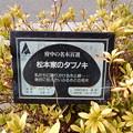 No.67号 松本家のタブノキ
