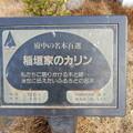 No.57号 稲垣家のカリン