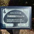 No.75号 多磨霊園のムネノキ
