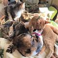 Photos: 170125リ猫だんご