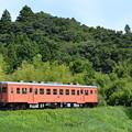 いすみ鉄道 臨時列車81D (キハ52 125)
