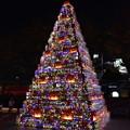 六本木ヒルズの前のクリスマスツリー