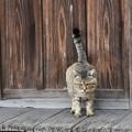 Photos: お寺にいた猫