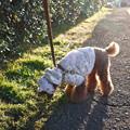 写真: 正月散歩 -2