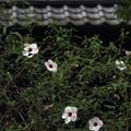 花と甍20160907
