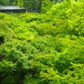 梅雨の東福寺