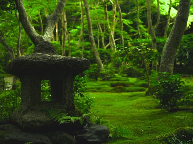 写真: 緑庭