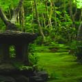 Photos: 緑庭