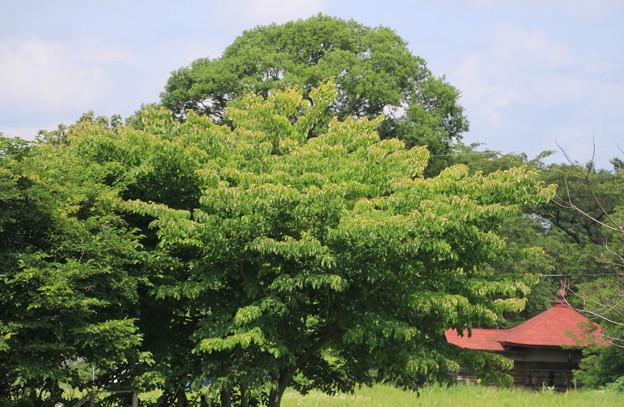 樹木と家01-12.07.10