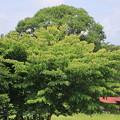 Photos: 樹木と家01-12.07.10