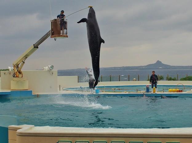 クジラ曲芸