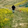 犬の散歩道