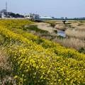 春の景色 小畦川