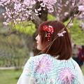 Photos: しだれ柳