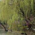 Photos: 揚州3 黒鳥