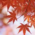 真っ赤な秋見つけた