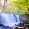 木漏れ日の銚子大滝