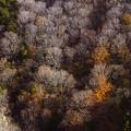 竜泊の白樺と紅葉