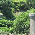 旧戸井線橋脚跡 IMG_0202