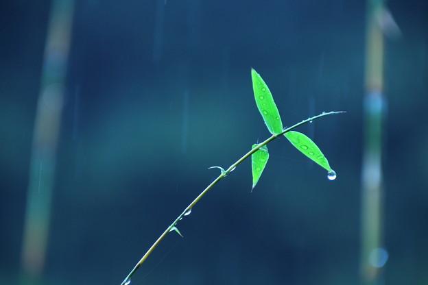 竹の径(ひとしずく)