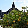 晩秋の姫路城
