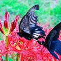 写真: 彼岸花と蝶さん