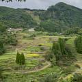 写真: 稲刈り始まる