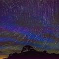 写真: 唐傘松と星景