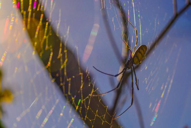 写真: cobweb