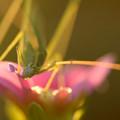 写真: 花を食らう
