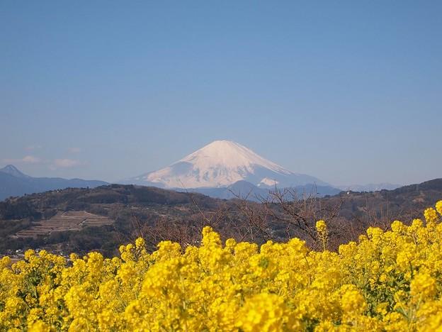 写真: 吾妻山 (7)