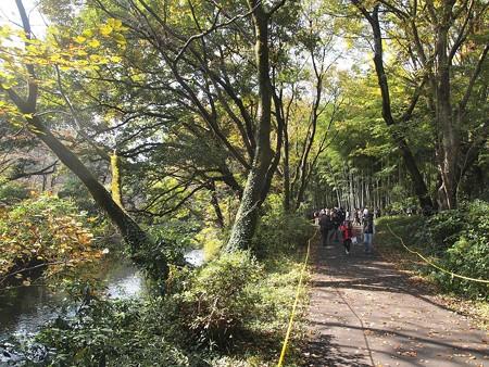 日立中央研庭園 (5)