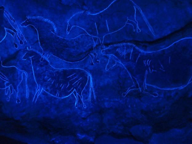 ラスコー展 (65) 黒い牝牛
