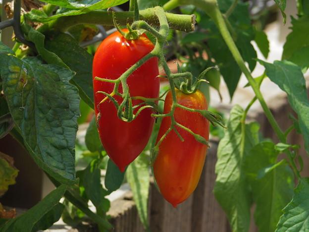 びっくりトマト