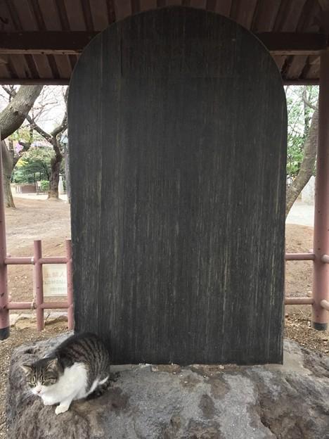 3月_飛鳥山公園 3