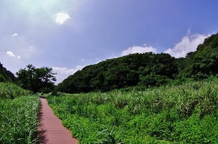 小網代の森 III
