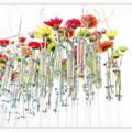 写真: ハロウィン・山手西洋館 test-tube flowers.