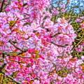 写真: 春が来る 春が来る 甦り  春が来る 春が来る アロンの杖