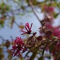 写真: 201104flower 372