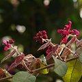 写真: 201104flower 375