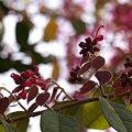 写真: 201104flower 376