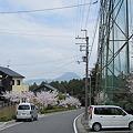桜越しの三上山