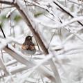 写真: 雪と。1