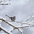 写真: 雪と。2