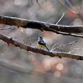 写真: 春の足音