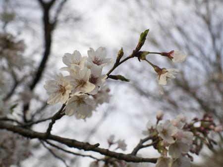 野川公園(3)