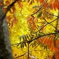 杜の紅葉3