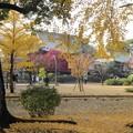 お山の紅葉風景2